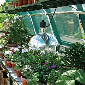 Greenhouse Grow Light in a Hartley Botanic Glasshouse